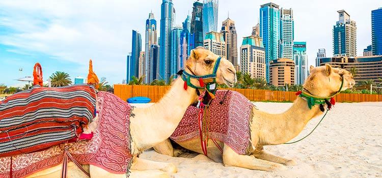 Получаем две визы ОАЭ
